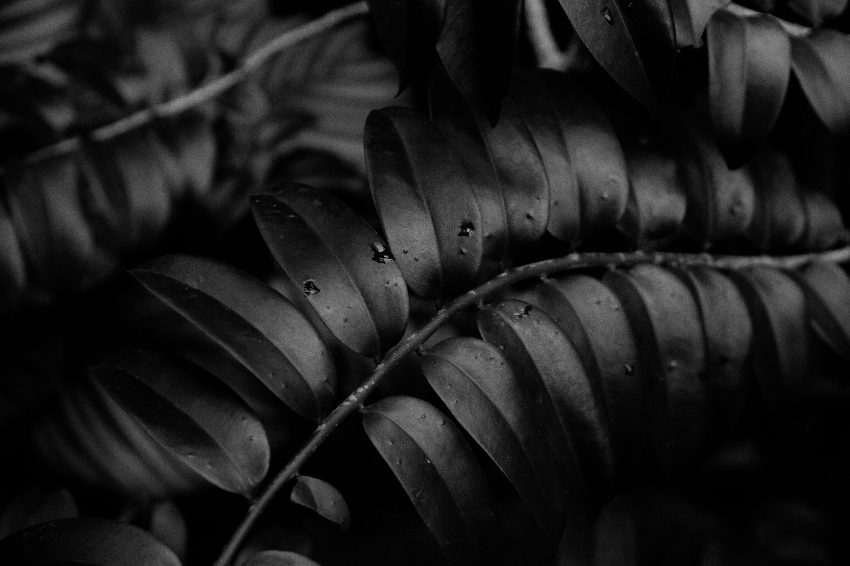 Serena Morandi Photography- Plants